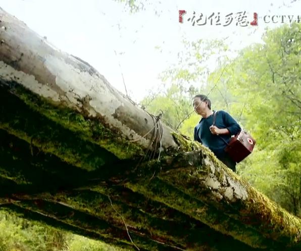 """海外网&CCTV""""记住乡愁""""MV——《游子吟》"""