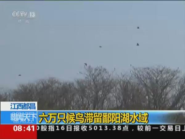六万只候鸟滞留江西鄱阳湖水域